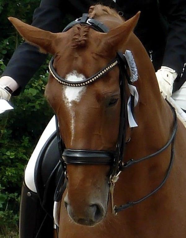 Pferdezeichnung nach Fotovorlage