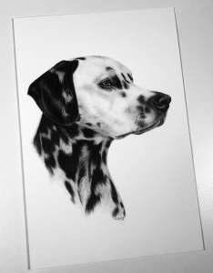 Dalmatiner Bleistiftzeichnung