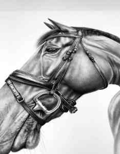 Detailreiche Bleistiftzeichnung Pferd