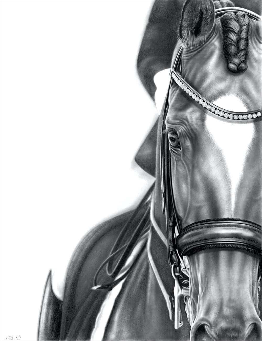 pferdeportrait kandare