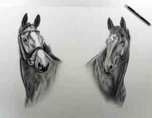 Große Pferdecollage Bleistift