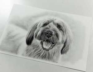 Hundeportrait gezeichnet
