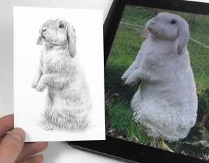 Kaninchen Bleistift Zeichnung