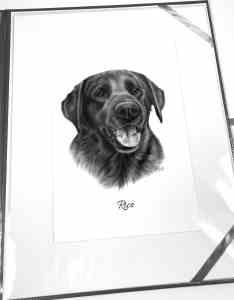 Labrador gezeichnet Bleistift