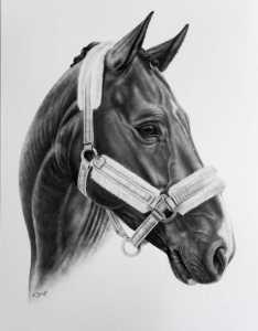 Pferd Zeichnung Halfter
