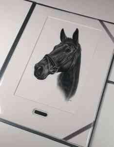 Pferdebild Portrait