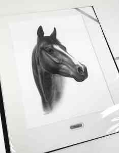 Pferdekopf Zeichnung Schwarz-Weiß