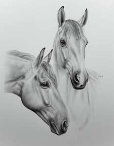 Pferdezeichnung Schimmel
