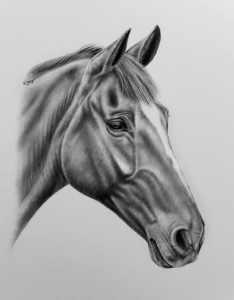 Portrait Pferdezeichnung
