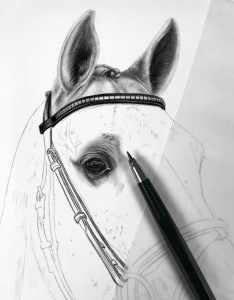 Schimmel Zeichnung Bleistift