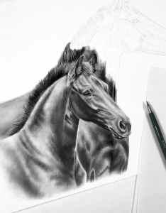 Zeichnung Fohlen und Stute