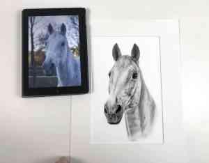 Zeichnung vs Foto Pferdekopf