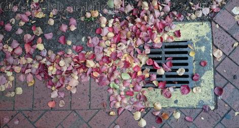 Autumngoldengrove_KarenCarlisle_2015