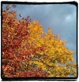 blouseybrown_2012-10-20