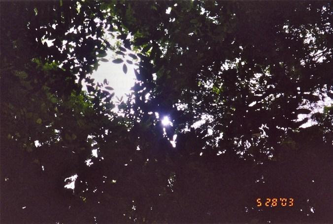 Costa Rica Tree Gap