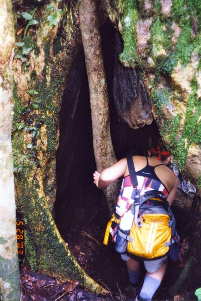 Costa Rica Climbing Inside a Tree