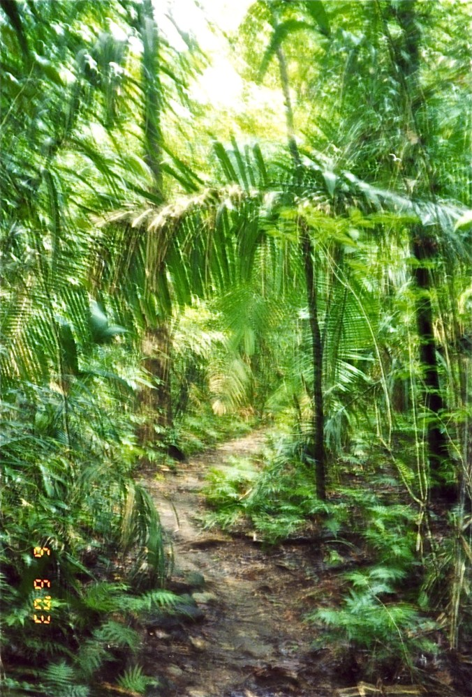 Beach rainforest