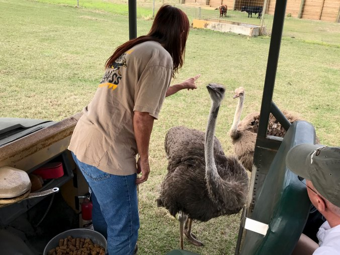 Wilderness Safari tour guide disciplining ostrich for stealing food