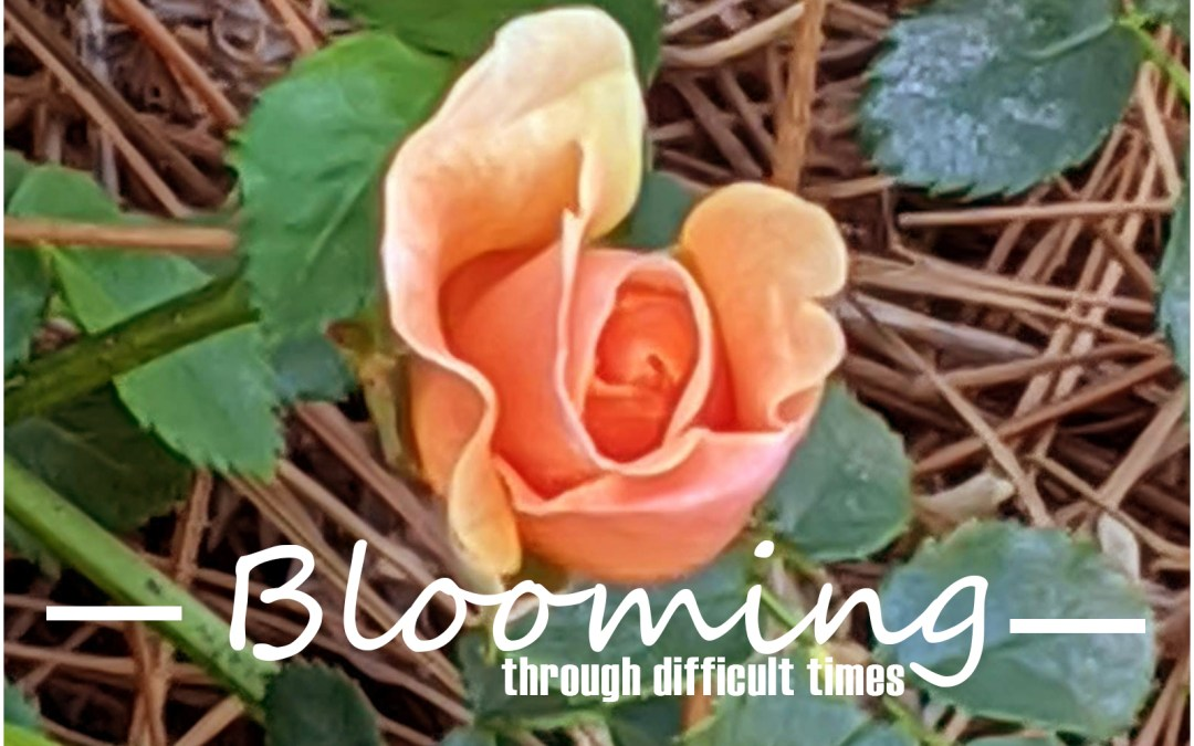 Blooming Through Difficult Times