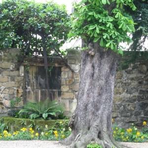 Chestnut Tree in Courtyard, Paris, France, Karen Hugg, www.karenhugg.com #plants #gardens #Paris
