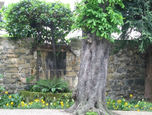 Chestnut Tree in Courtyard, Paris, France, Karen Hugg, www.karenhugg.com #plants #gardens #Paris