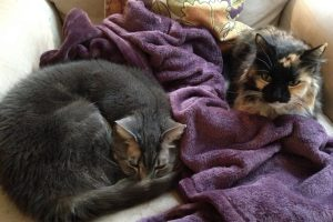 Maddie and Aleksy Cats, How Plants and Cats Can Live Together, www.karenhugg.com #houseplants #cats #toxicplants