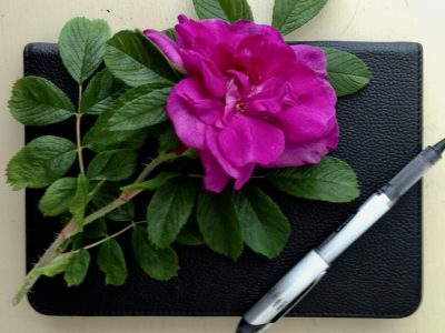 Rose, pen, journal, Karen Hugg, www.karenhugg.com