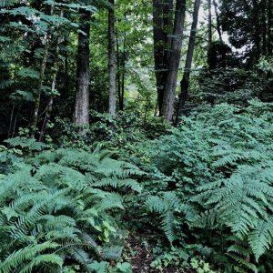 Woods, Karen Hugg, www.karenhugg.com #woods #trees