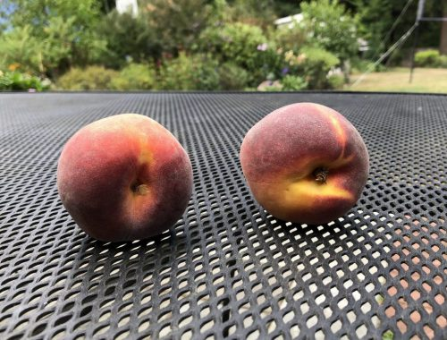 Peaches, Two Author Goals to Grow and Simplify my Life, Karen Hugg, https://karenhugg.com/2018/08/31/author-goals/ #author #goals #readership #writing #businessplan