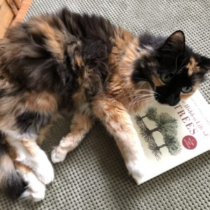 The Hidden Life of Trees, https://karenhugg.com/2018/09/08/trees/, Happy #Caturday! We're Reading About Trees, Karen Hugg, #Caturday #trees #peterwohlleben #books #gardening #environment