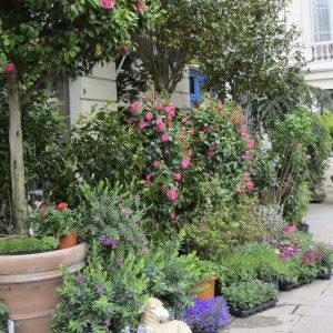Paris Plant Shop, How Little Plant Shops Inspired a Big Paris Dream, Karen Hugg, https://karenhugg.com/2019/01/16/plant-shops/ #Paris #plantshop #novels #books #TheForgettingFlower
