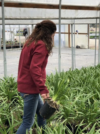 Container Designer, How I Found New Inspiration at a Familiar Nursery, Karen Hugg, https://karenhugg.com/2019/05/29/nursery #wholesale #plants #nursery #growers #greenhouse #gardening #gardendesign