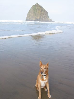 Arrow, My Dog, Was My Sweet Puppy Sent by a Dog From Heaven? Karen Hugg, https://karenhugg.com/2019/06/06/dog/ #dog #pets #puppy #Dingo #Arrow #Olive #dogfromheaven #CannonBeach