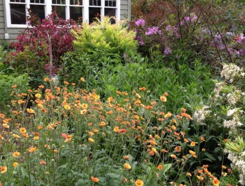 Sunny Island Bed, How I Bring Bees, Butterflies, and Birds to My Garden, Karen Hugg, https://karenhugg.com/2019/06/01/bees-butterflies-and-birds #gardening #plants #plantsforsun #bees #butterflies #birds #garden