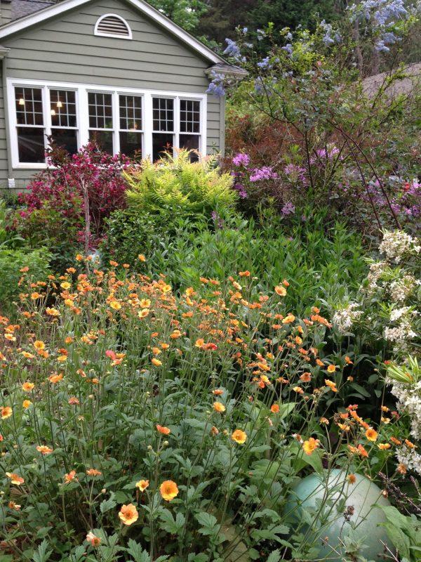 Sunny Island Bed, How I Bring Bees, Butterflies, and Birds to My Garden, Karen Hugg, https://karenhugg.com/2019/06/01/bees-butterflies-and-birds #gardening #plants #plantsforsun #bees #butterflies #birds #garden