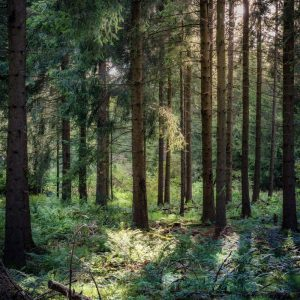 Forest, The Amazing Effects of Forest Bathing, Daily Stress ReLeaf, Karen Hugg, https://karenhugg.com/2021/03/11/effects-of-forest-bathing/ #forestbathing #effects #shinrinyoku #Japan #woods #nature #relaxation #destressing #stress #mentalhealth