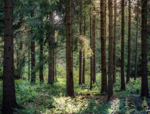Forest, The Amazing Effects of Forest Bathing, Daily Stress ReLeaf, Karen Hugg, https://karenhugg.com/2021/03/11/effects-of-forest-bathing/ #forestbathing #effects #shinrinyoku #Japan #woods #nature #relaxation #destressing #stress #mentalhealth