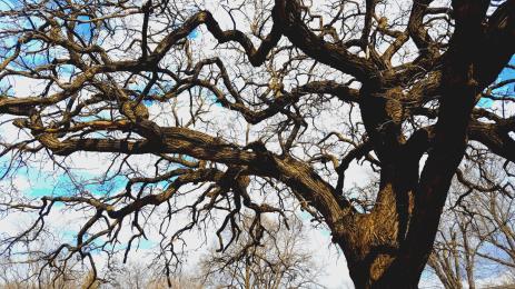 Oak Branches, Karen Huss