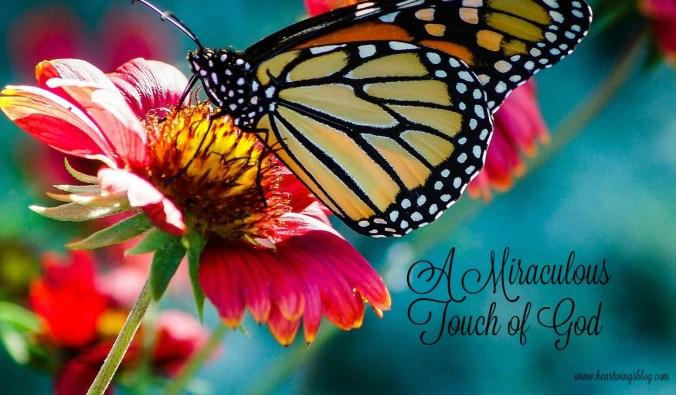 butterfly-743531_1280
