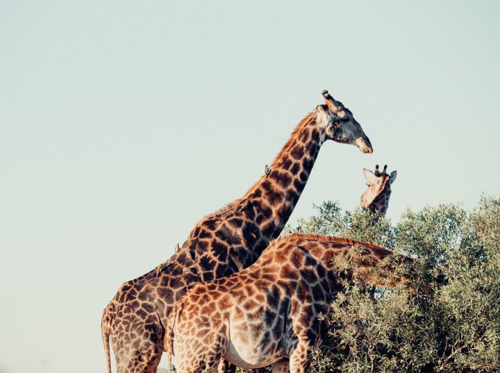 south-africa-kruger-national-park-2