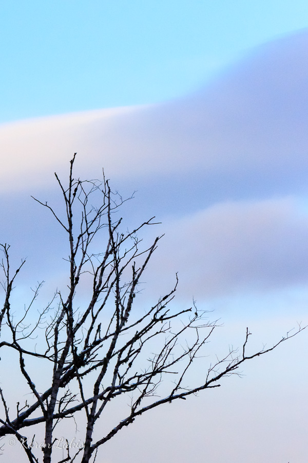 winter-sillhouette