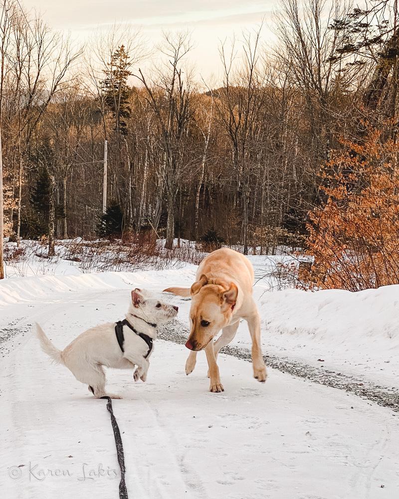 Chessie and Georgie