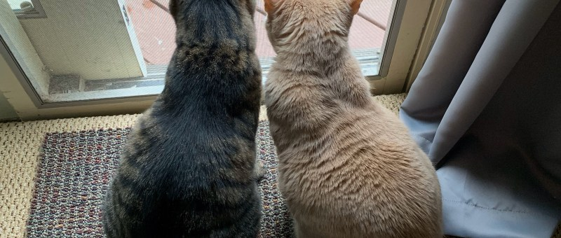 two cats looking out through a doorway