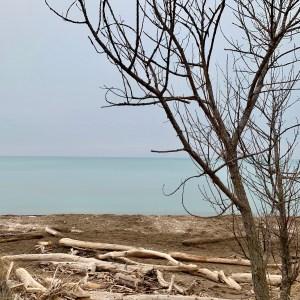 sky, water, driftwood