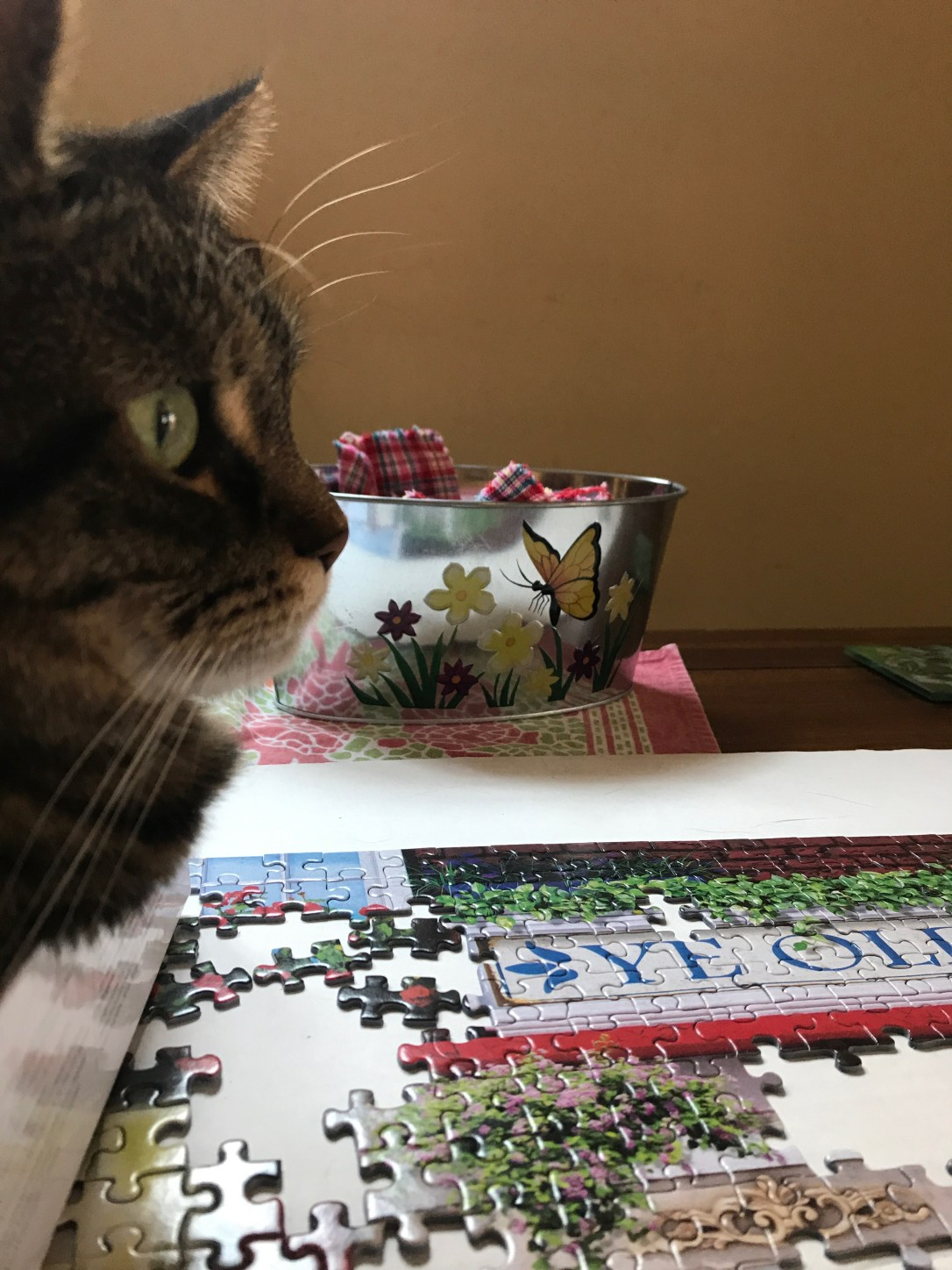 cat in a puzzle box looking at a partially finished puzzle
