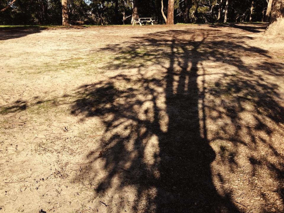 Tree shadow shape