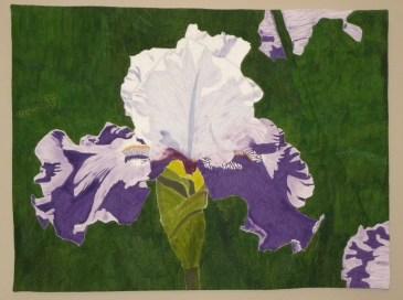 Summer Iris : 32x42