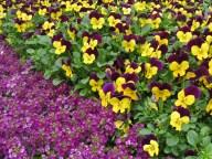 greenhouse flowers6