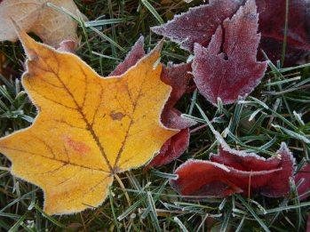 Frosty leaves 6 © 2013 Karen A Johnson