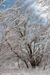 Snowy Tree ©2014 Karen A Johnson